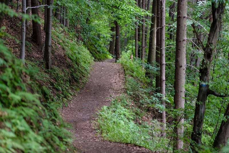 walking trails surround us